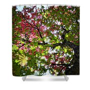 Touches Of Autumn  Shower Curtain