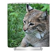 Tough Cat Shower Curtain