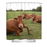 Tough Cows Shower Curtain