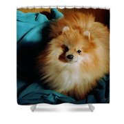 Touley Shower Curtain