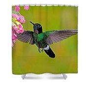 Tourmaline Sunangel Hummingbird Shower Curtain