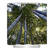 Towering Bamboo Shower Curtain