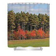 Towering Evergreens Shower Curtain