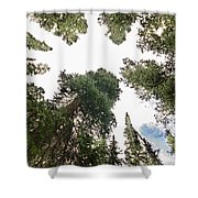 Towering Pine Trees Shower Curtain