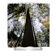 Towering Timber Shower Curtain