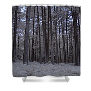 Towering Trees Over Ferns In Blue Shower Curtain