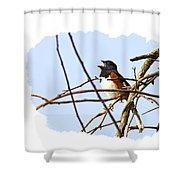 Towhee Singing On Top Of Mountain Shower Curtain