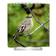 Townsend's Solitaire Shower Curtain