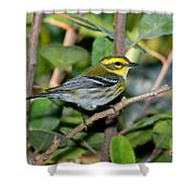 Townsends Warbler In Tree Shower Curtain
