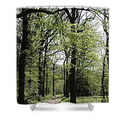 Track Trough The Woods Shower Curtain