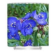 Tradescantia Blooming Shower Curtain