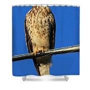 Traffic Hawk Shower Curtain