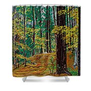 Trail At Wason Pond Shower Curtain by Sean Connolly