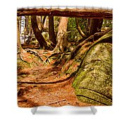 Trail In A Forest, Muskoka, Ontario Shower Curtain