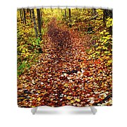 Trail In Fall Forest Shower Curtain