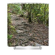 Trail Of Roots Shower Curtain