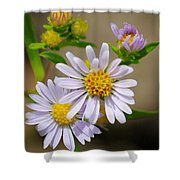 Trail Wildflowers Shower Curtain