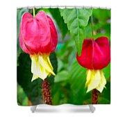 Trailing Abutilon Or Lantern  Flower Shower Curtain