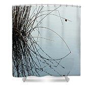 Tranquil Reeds Shower Curtain