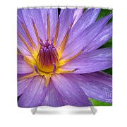 Tranquil Thoughts Shower Curtain