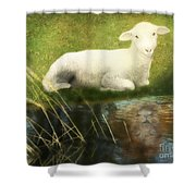 Transformation Lamb Or Lion Shower Curtain