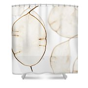 Translucent Shower Curtain