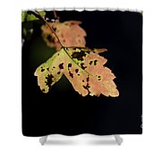 Translucent Maple Leaf Shower Curtain