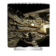 Transparencies Shower Curtain