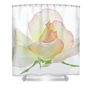 Transparent Rose 1 Shower Curtain