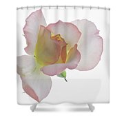 Transparent Rose 2 Shower Curtain