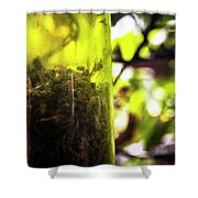 Trapped And Dead Bees Shower Curtain