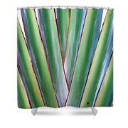 Travelers Palm 3 Shower Curtain