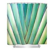 Travelers Palm 6 Shower Curtain