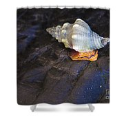 Traveling At A Snail's Pace Shower Curtain