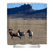 Traveling Band Shower Curtain