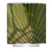Traveller's Palm Patterns Dthb1543 Shower Curtain