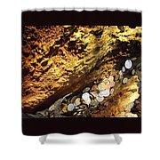 Treasure Bark 4 Shower Curtain