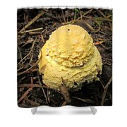 Treasures Of The Forest Four Shower Curtain