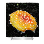 Treasures Of The Forest Two Shower Curtain