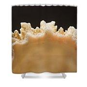 Treasures Of The Ocean 1 Shower Curtain