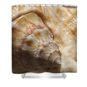 Treasures Of The Ocean 2 Shower Curtain