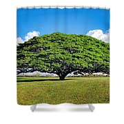 Tree 10 Shower Curtain