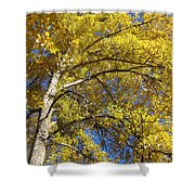 Tree 4 Shower Curtain