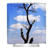Tree 8 Shower Curtain