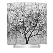 Tree Abstract In Black And White Shower Curtain