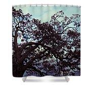 Tree Against Sky Shower Curtain
