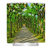 Tree Alley In Castle Park Shower Curtain