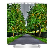 Tree Alley Shower Curtain