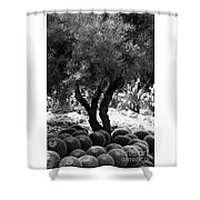 Tree And Cactus Shower Curtain