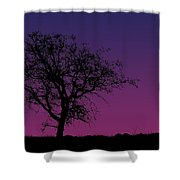 Tree And Coyote Shower Curtain
